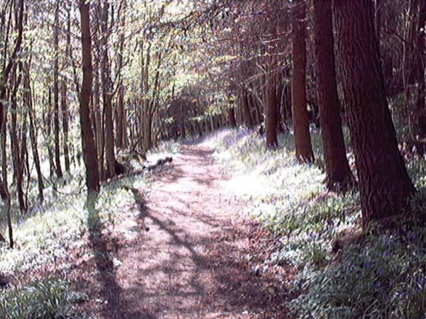 logie kirk path